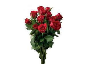 Dozen Sweetheart Roses  £3.00 from 11th Feb at LIDL