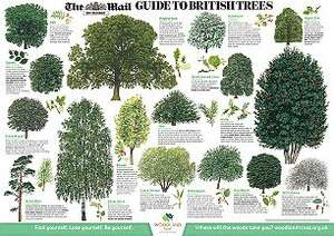 FREE British Trees & Wild Flowers wallchart, inside The Mail on Sunday £1.70