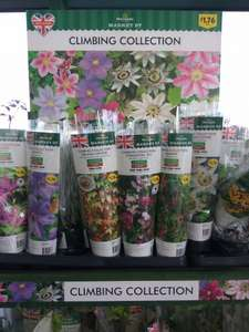 Clematis & other Climbing Plants at Morrisons instore - £1.76