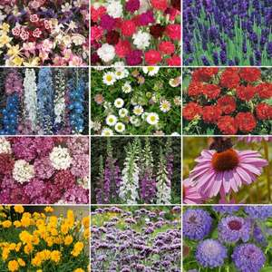 Perennial Plug Plants £7.98 / £12.94 delivered @ Thompson & Morgan : further price drop