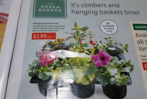 Hanging Basket Plants £2.99 instore @ Aldi