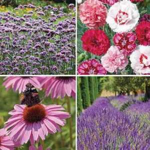 o2 Priority - 24 FREE perennial plugs from Thompson & Morgan for just £3 p&p