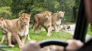 50% off family ticket deal for Knowsley Safari park £29 @ Hallam FM