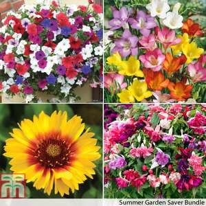 Summer Garden 232 plants & bulbs worth £76.93 for £14.95 Delivered @ Thompson & Morgan