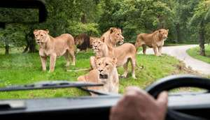 Family Hotel Break + Kids Go FREE To Knowsley Safari Park from £49 for 2 adults & 2 Kids at Groupon
