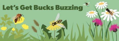 Free wildflower seeds (Buckinghamshire and Milton Keynes)