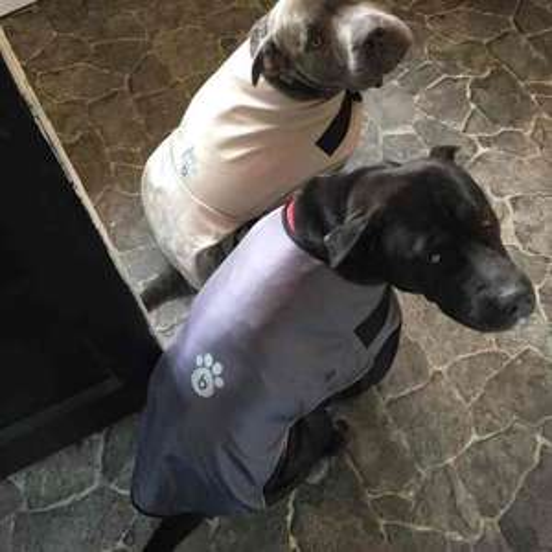 Dog Rain Jackets B&M - £1 or less