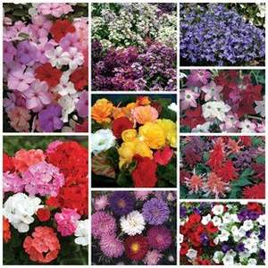 90 flowers for £7.99 - jerseyplantsdirect