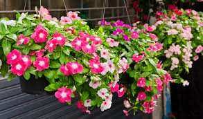 Bedding plant packs was eg 4 for £10 now 4 for £5 / was 2 for £10 now 2 for £5 instore B&Q Bishopbriggs