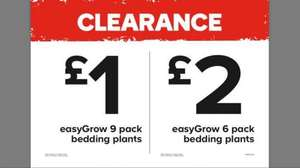 CLEARANCE on ALL 6 pack & 9 pack easy Grow bedding plants @ B&Q