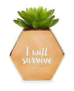 """I will survive"" artificial plant in pot, was 9.99, now £4.00, instore (Denton retail park) and online @ New Look (del from £3.99)"