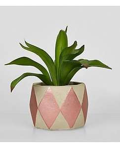 Rose gold concrete artificial plant, was 8.99 now £4.00 @ New Look (instore Denton Retail Park and online - del from £3.99)