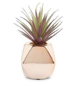 Gold metallic artificial spikey plant, was 7.99 now £3.00 @ New Look (instore Denton Retail Park and online - del from £3.99)