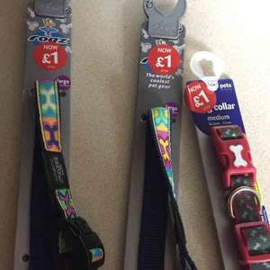 Instore Merry Hill Pets at Home dogs collars & leads - £1