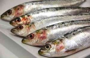 morrisons counter sardines £2.47 per kg