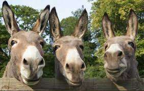 Visit The Donkey Sanctuary for FREE [Belfast / Birmingham / Derbyshire / Ivybridge / Leeds / Manchester / Sidmouth]