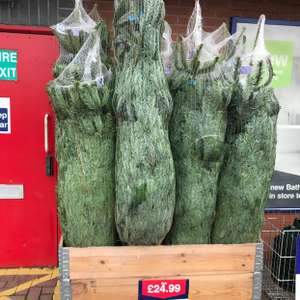 Real Christmas Trees - £24.99 instore @ Wickes
