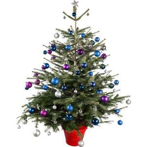 Real Nordmann Christmas Trees (5-6ft) £11.99 at JTF