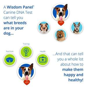 Wisdom Panel 2.0 Dog DNA test £40 Amazon Deal of the Day