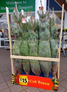 Real Christmas Tree - £15 instore @ Morrisons