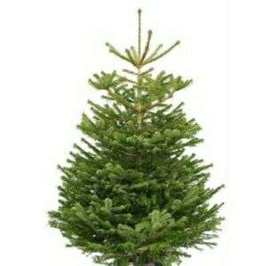 Real Christmas Trees approx. 5-6ft £9.99 instore @Home Bargains