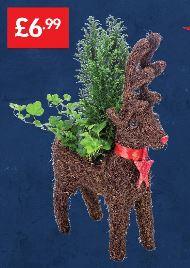 Christmas Reindeer Planter £6.99 - LIDL