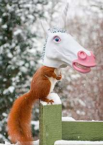 Make this winter a magical time for your squirrels: Unicorn Squirrel Feeder £15.96 ,Amazon