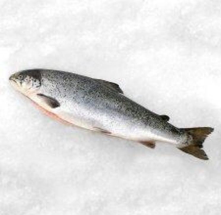 Whole Salmon £5.50 per kilo at Tesco from Monday