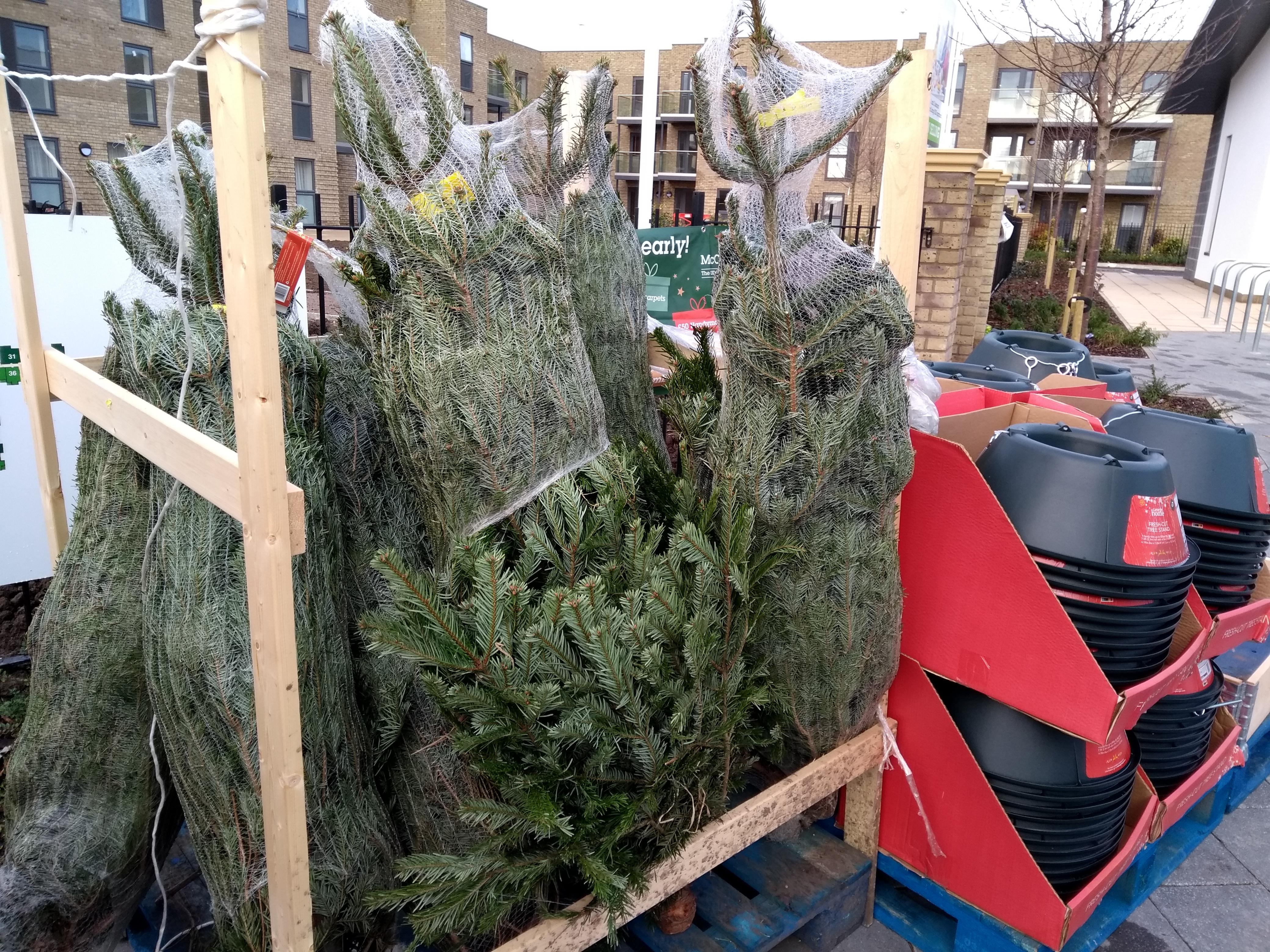 Christmas trees £12.50 instore