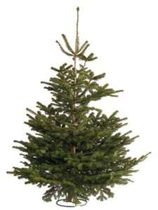 Last Minute Real Xmas Tree at Wickes for £9.99