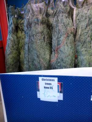 Last minute Xmas Trees down to £2 at Wickes