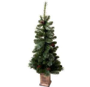 Wilko 3-4ft Real Potted Christmas Tree reduced to £5