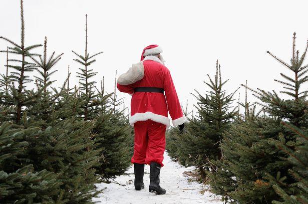 Aldi Kettering real christmas trees £1