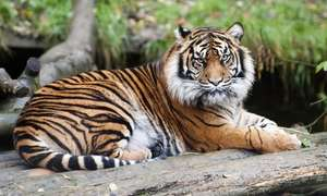 Dudley Zoo - groupon offer £4.90 for a child ticket - £7.50 for an adult ticket - £21 for a family ticket for two adults and two children