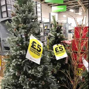 Christmas Trees Reduced instore £5 @ Homebase