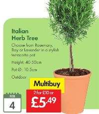 Italian Herb Tree £5 (Multibuy x 2 or £5.49 each) – LIDL are making an offer that you can't refuse - Rosemary Bay or Lavender