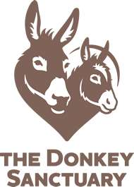 Free Entry to The Donkey Sanctuary Sidmouth ( + Manchester / Leeds / Birmingham / Belfast / Derbyshire / Ivybridge / Spain / Italy / Ireland)