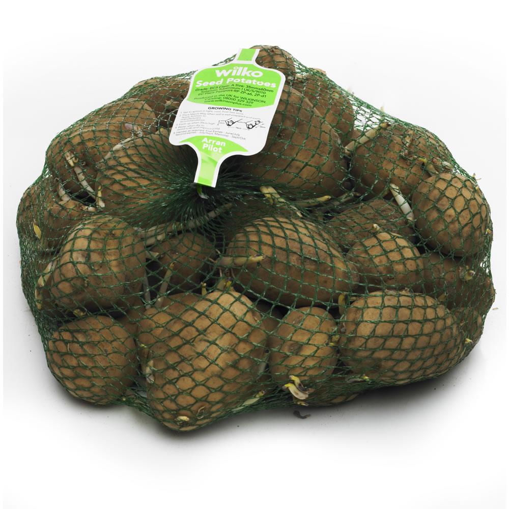 Seed potatoes 2 kg bags - £2.75 instore at Wilko Wrexham store