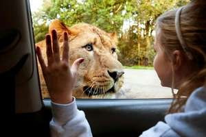 Half price children's tickets for half term £6.75 @ Knowsley Safari Park