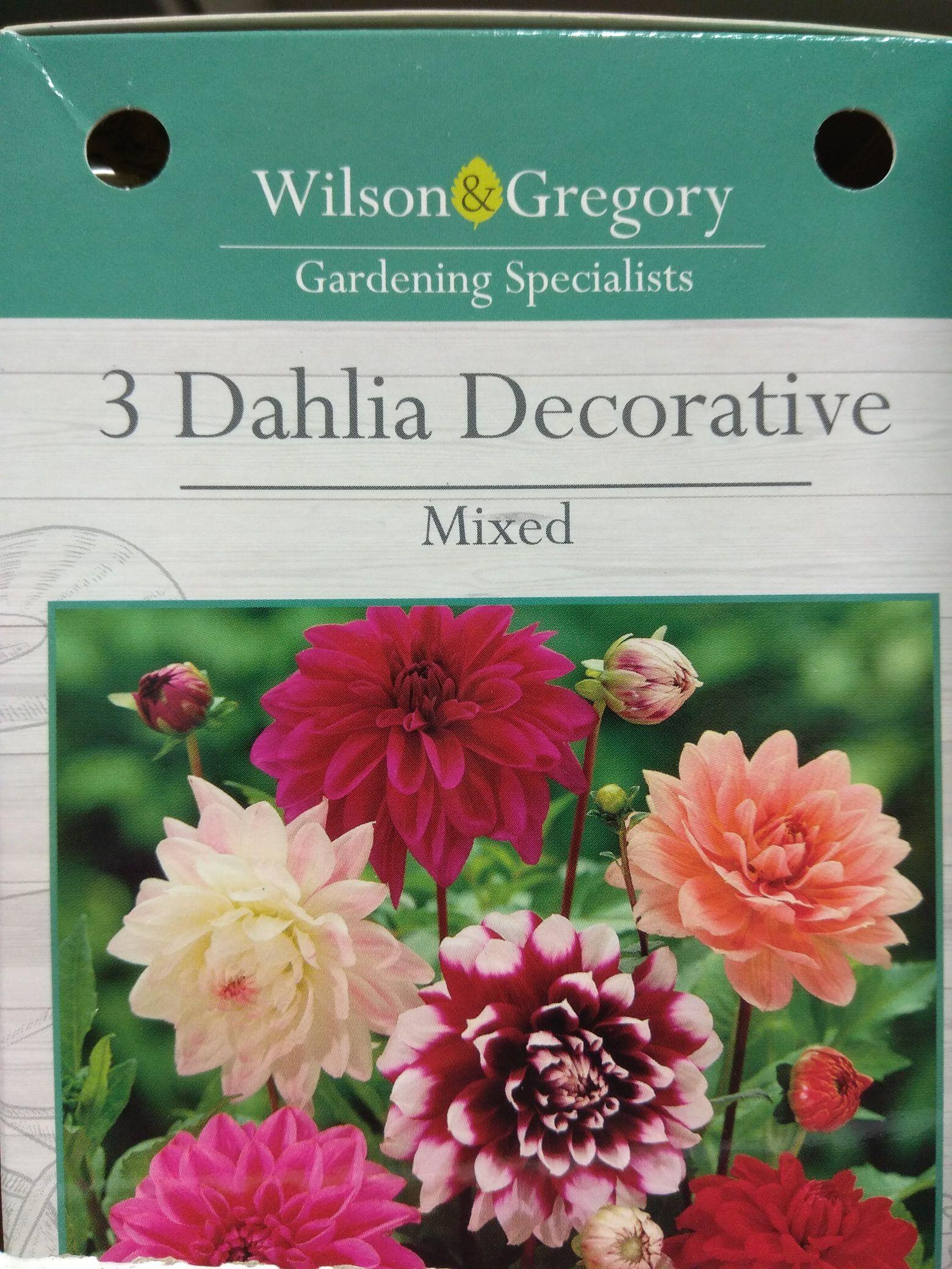 3 x Dahlia decorative mixed bulbs £1 @ Poundland