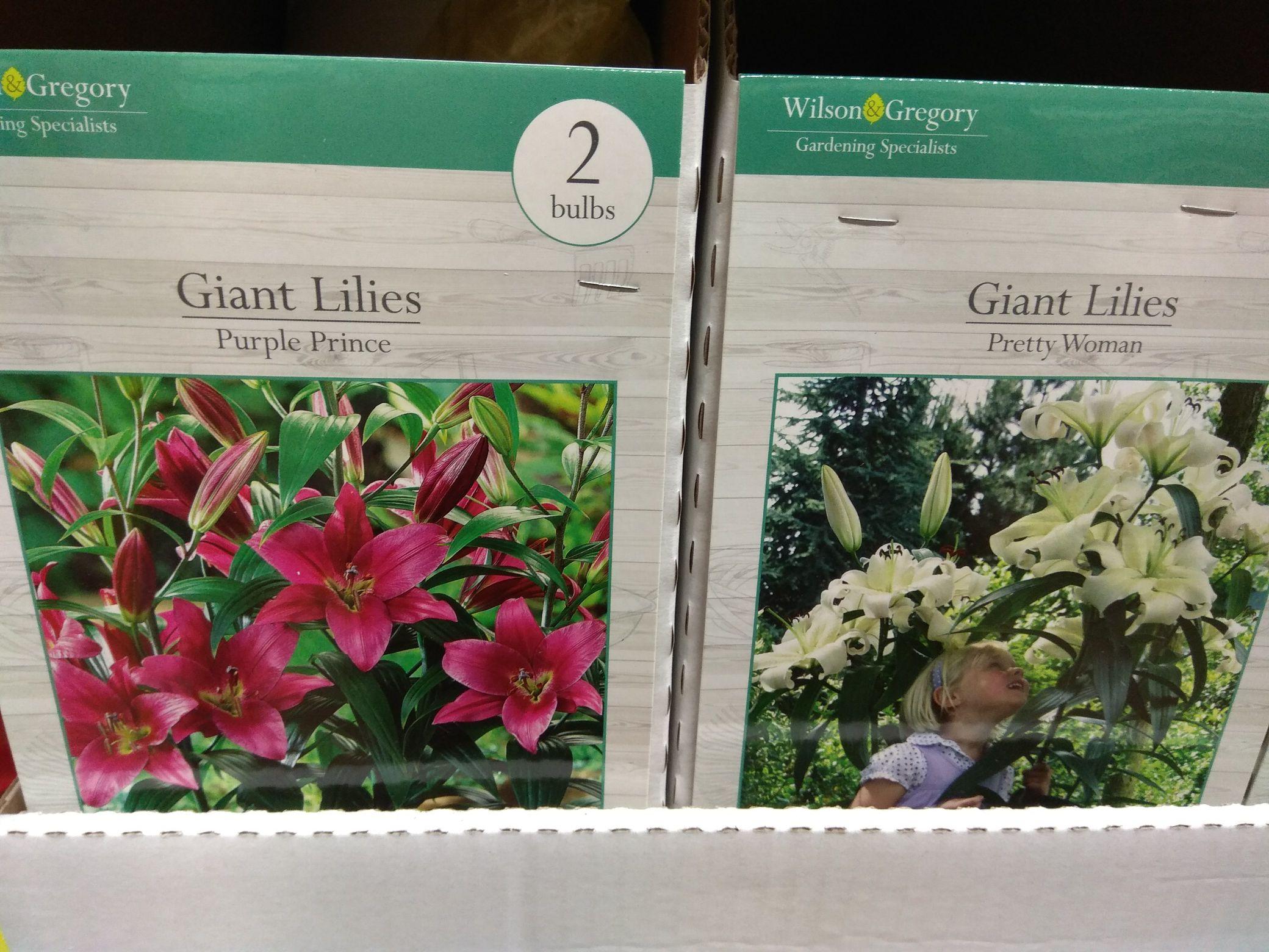 2 x Giant Lilies Pretty Woman / Purple Prince bulbs £1 @ Poundland