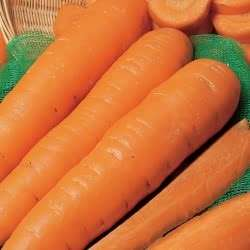 Carrot seeds 8 times amount for £2.99 delivered @ Marshalls seeds