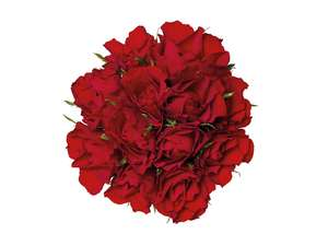 A Dozen any Colour Roses Inc Red £2.09 @ Lidl instore