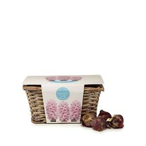 Wilson and Bloom - Indoor Hyacinth Fondant and wicker basket set £7.50 + £2 Click and collect or £3.49 Delivered at Debenhams