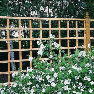 Heavy Duty Trellis Panel - 3 Sizes From £7.99 + £4.95 Delivery @ WebbsDirect