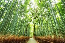 2 Week May Japan Holiday Inc Flights, Hotels & Railcard £1038.08pp @ Ebookers