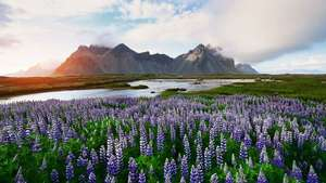 From London: 4 Night June Iceland Break (Golden Circle & South) £253.23pp Inc Flights, Hotels & Car Hire @ Ebookers