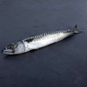 Morrisons fish counter whole mackerel £3 per kilo ungutted instore