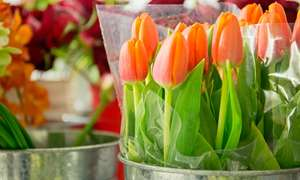 £20 towards flowers for £10, £30 - £15 & £50 - £25 - Save 50% at Groupon