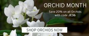 20% off Orchid Arrangements with Voucher Code @ Bloom